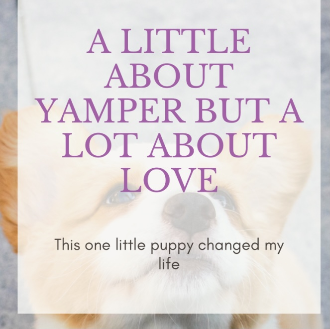 A Little About Yamper But A Lot AboutLove